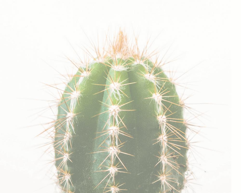 Sesiones de coaching para madres e hijos en Madrid y Online - fondo cactus b2